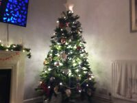 4ft,5ft,6ft real Christmas trees with FREE delivery £25all in.