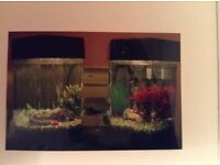 Double hexagon tank, for small tropical or cold water fish. *decommissioned*