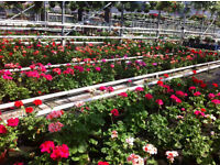 Seasonal workers for Plant Nursery in Slough for up to 8 weeks from 20th March