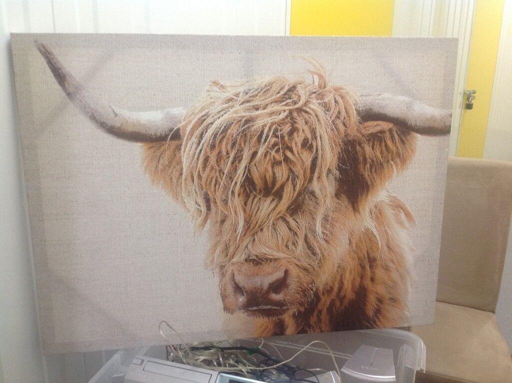 Highland Cow Canvas In Kingsknowe Edinburgh Gumtree