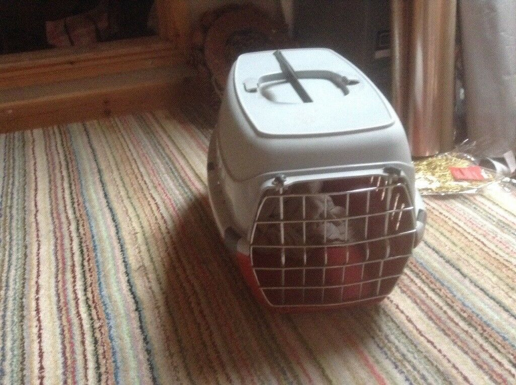 Pets at home cat carrier new