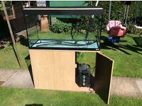 Fish Tank, Tropical