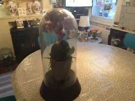 Victorian style glass dome