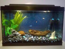 Fish Tank Aquarium 70 litre