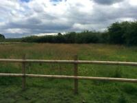 Grazing available for horses in congleton area £20 per week per paddock/horse sole use 24/7 turnout