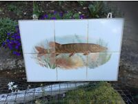 Tiled encased picture of pike fish