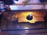 Selling Turtle Tank £70