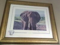 Stephen Gayford gold framed pic,limited edition