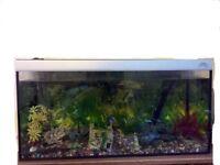 Fish tank (plus pump, light and accessories)