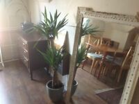 BEAUTIFUL 1 BED FLAT TO RENT IN BRUDENELL ROAD HYDE PARK LS6 **