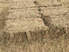 Quality meadow hay bales