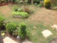 Mature garden plants