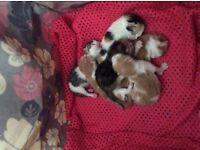 6 lovely kittens
