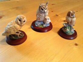 Collection Of Border Fine Arts Owls