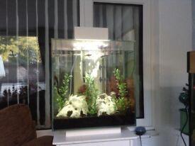 Fluvel Aqua edge aquarium