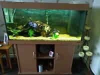 Aquarium Tank, Stand and Accessories