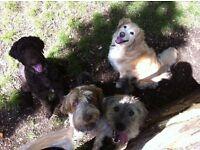 Country Dog Club Dog Walking Service King's Lynn