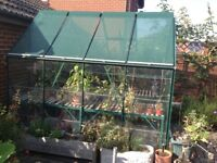 8'x6' Elite Greenhouse. Very Good Condition. Shelving & Stagiing plus Shading incl. £500.00