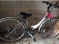 Apollo Etinnena bike