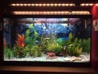 Fish Tank Light-Glo 120L