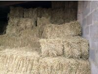 Small square hay bales, excellent quality