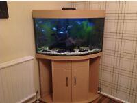 180L Corner Tropical Fish Tank Plus 10 Blue Acara Fish