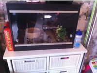 Carpet python with viv hand tame in and out viv full set up includes heat mat and light