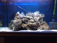 26kgs Matured Fiji Live Rock for Marine Salt Water Aquariums Fish Tank