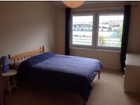 Large Double Room Available for Professional Male