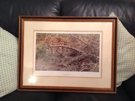 4 limited edition wildlife prints by world famous artist Alan M Hunt