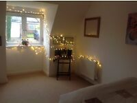 Double Room for Rent ( for a professional female )