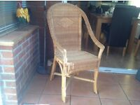 Cane chaire
