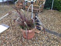 Large Garden Plant pots x 2