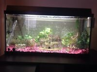 Large fishtank 3ft by 1.5ft plus alot off accessories