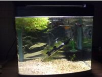 Tropical fish tank 48l fully equipped