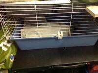 Guinea pig / dwarf rabbit cage