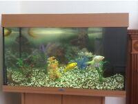 Large juwel aquarium with accessories and fish.
