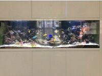 Marina Fish Tank