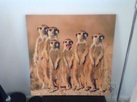 Meerkat canvas print .