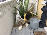 Americana Agava plant