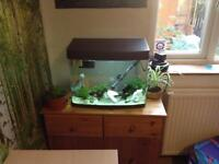 🐠Fish tank 37 Peters +filters lights and accessories. No fish included