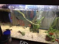 Various size mollies for sale