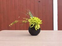 Black Vase with Plant