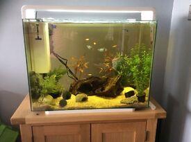 80L aquarium