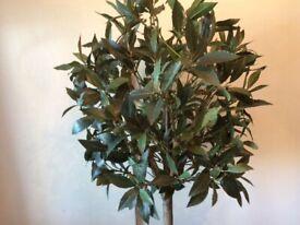 Realistic Faux Bay Tree Plant