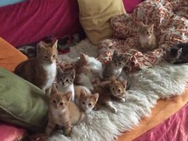 Adorable Kittens for sale to homes with gardens