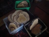 Wood slices for table centrepieces