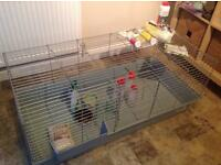 Large indoor Guinea pig cage & accessories
