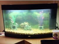 Bow fronted aquarium, complete with 2 pumps and ornaments