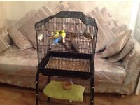 Bird cage and 4 canaries